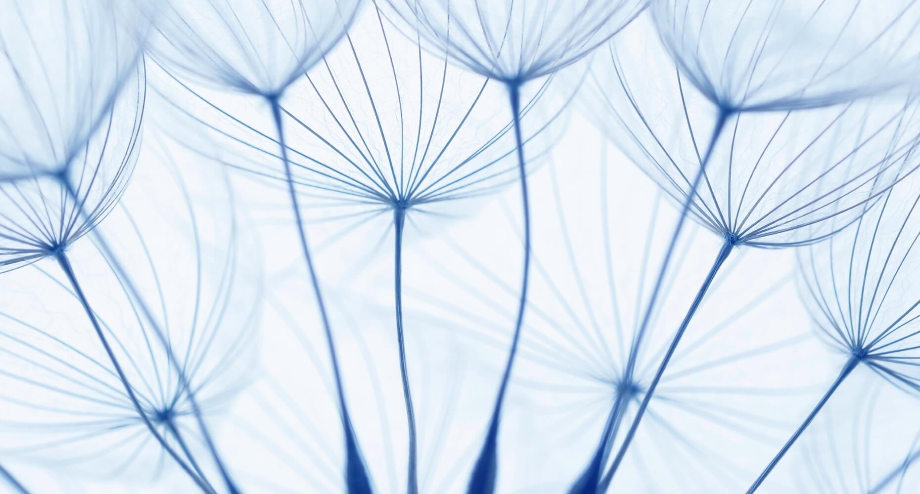Wie lernen künstliche neuronale Netze?